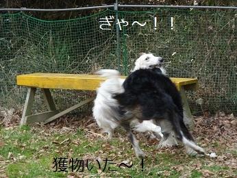 2010.01.04  (16)