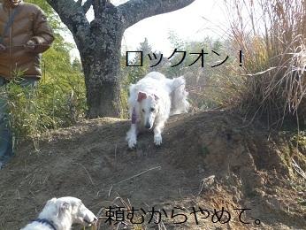 2010.01.04  (53)