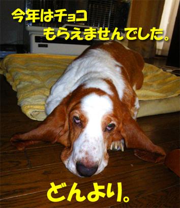 02_choco01.jpg