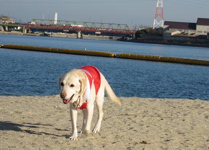 20091222海は寒い