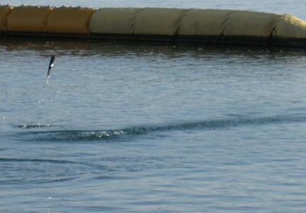20091226海は寒い