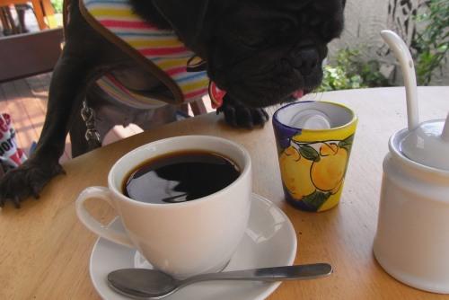 110927コーヒー