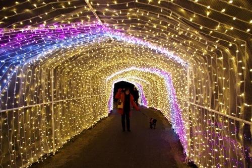 111127光のトンネル
