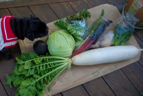 120204お野菜