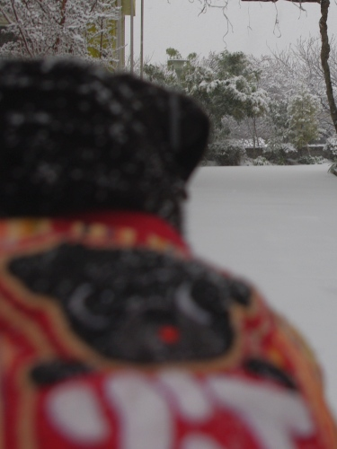 120229雪...