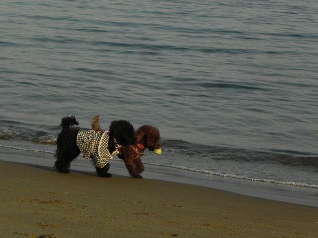 海にはいるのはかえでだけ~