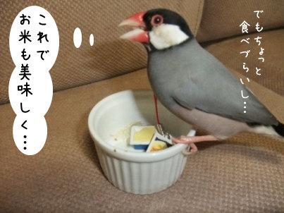 で、お米を食べて・・・