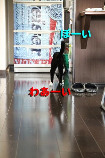 ?IMG_0032_Rぽーい