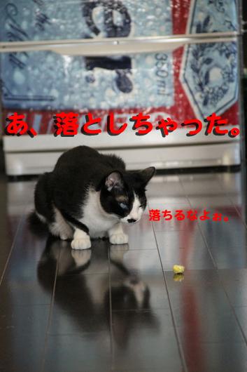 ⑤IMG_0067_R落とした
