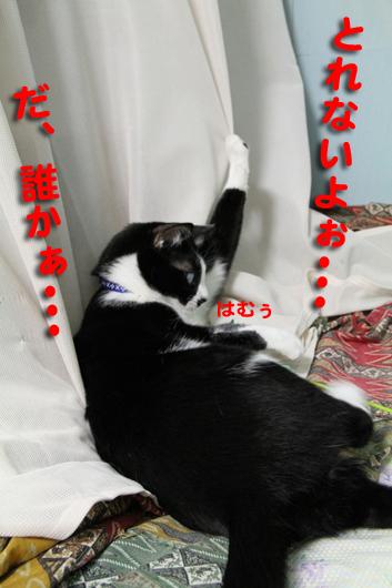 IMG_0088とれない