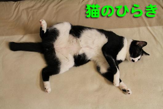 IMG_0001猫の開き