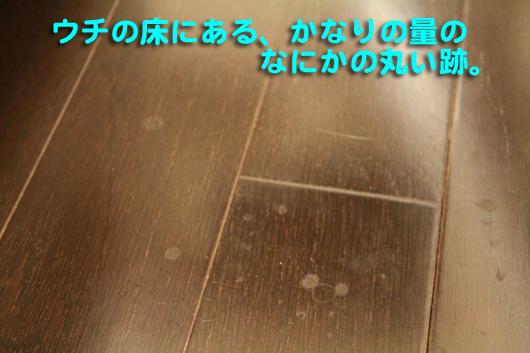 IMG_0500_R丸い跡