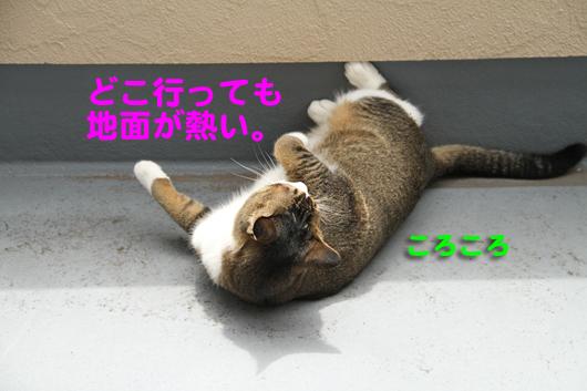 IMG_0005_Rころころ