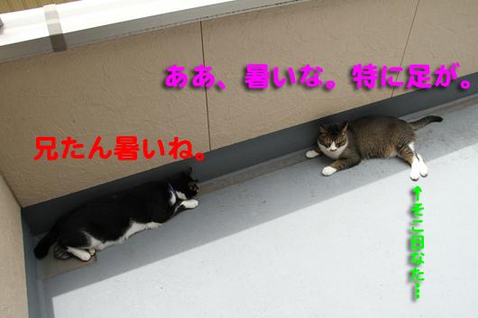 IMG_0032_R暑いね