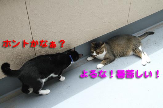 IMG_0034_Rホント?