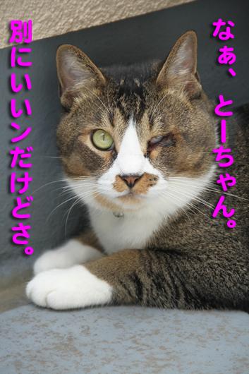 IMG_0073_Rなあとーちゃん