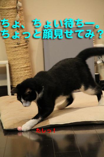 IMG_0035_Rちょい待ち