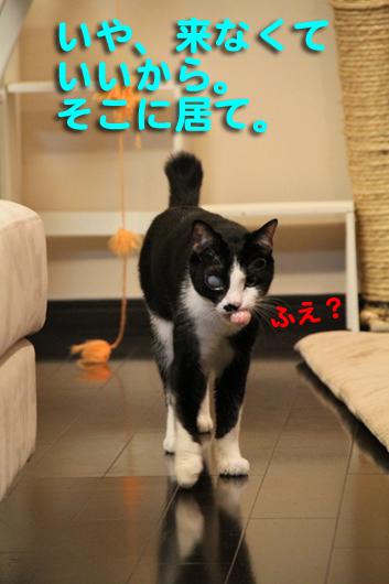 IMG_0037_Rふえ?