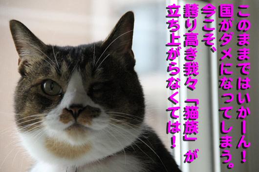 IMG_0103_R誇り高き猫族