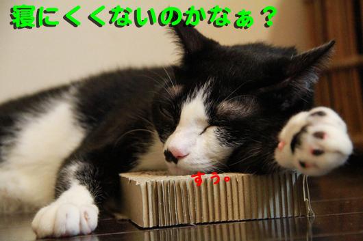 IMG_0087_R寝にくくない?