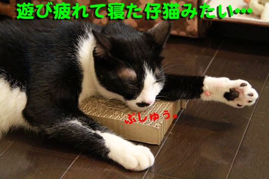 IMG_0073_R仔猫