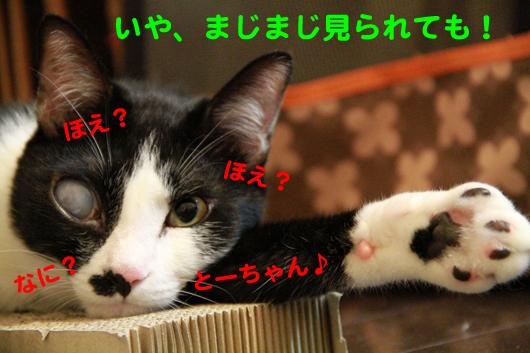 IMG_0082_Rとーちゃん♪
