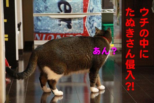 IMG_0099_Rたぬきさん侵入