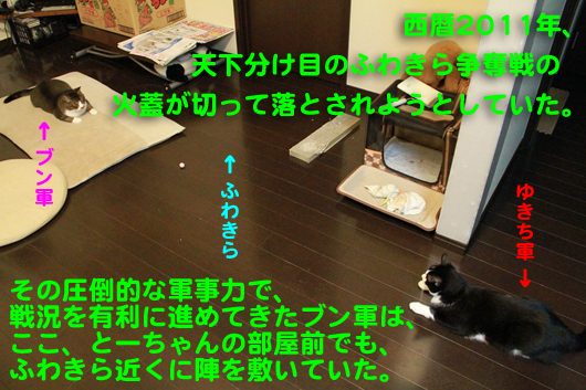 IMG_0105_Rふわきら争奪