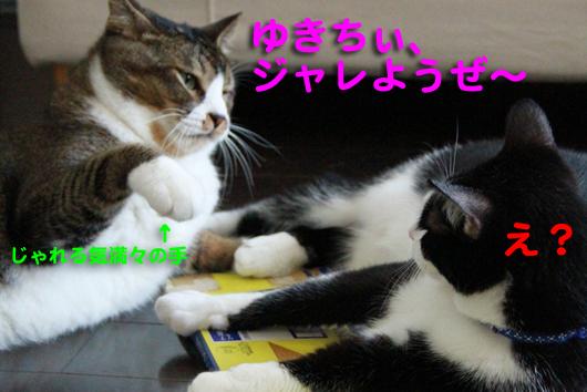 IMG_0255ゆきちぃ_R