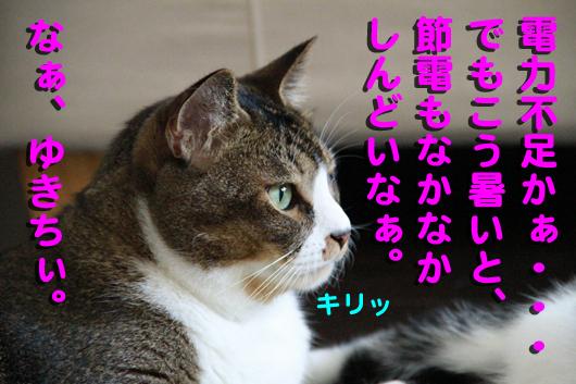 IMG_0260_Rきりっ