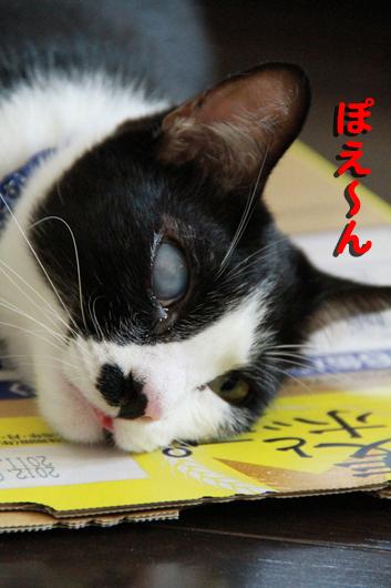 IMG_0263_Rぽえん