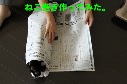 IMG_0004_Rねこ巻き