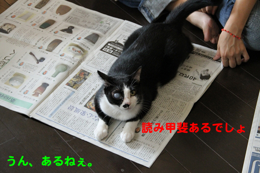 IMG_0013_R読み甲斐
