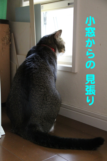 IMG_0006_R小窓見張り