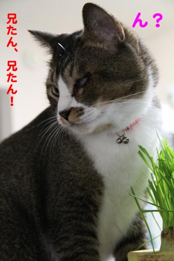 IMG_0063_R兄たん!