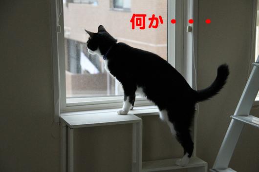IMG_0073_R何か・・・
