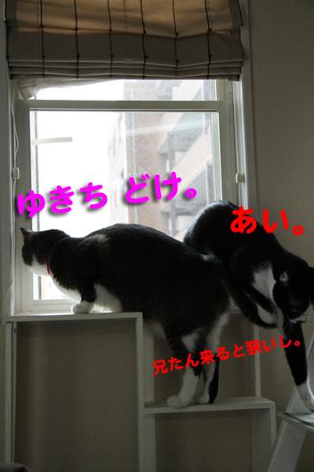 IMG_0084_Rゆきちどけ