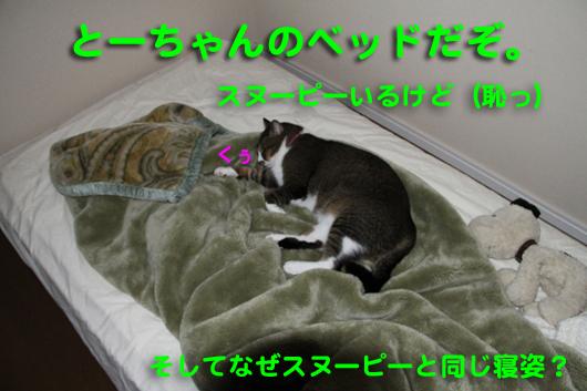 IMG_0171_R父ちゃんのベッド