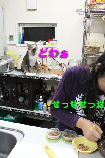 IMG_1197_Rどわぁ