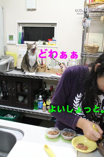 IMG_1196_Rどわぁぁ