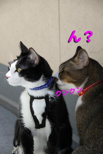 IMG_1386_Rん?クンクン
