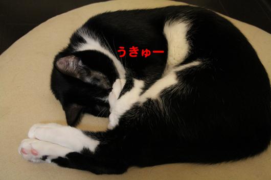 IMG_0110_Rうきゅう