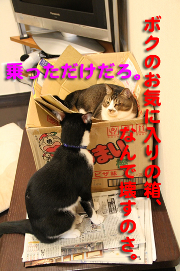 IMG_0141_Rお気に入り箱