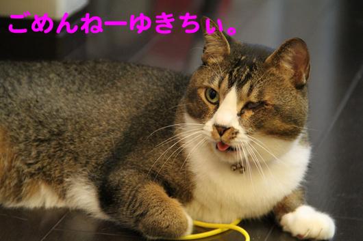 IMG_0178_Rごめんねゆきち