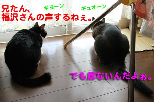 IMG_0019_R福沢さんの声