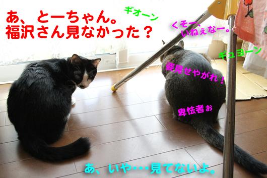 IMG_0021_R福沢さん見た?