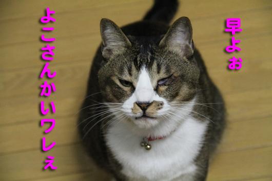IMG_0031_Rよこせワレ