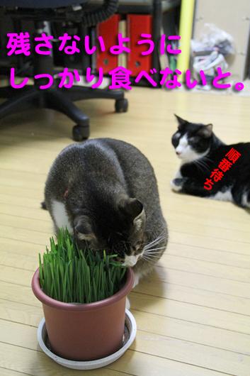 IMG_0083_R残さず食べる