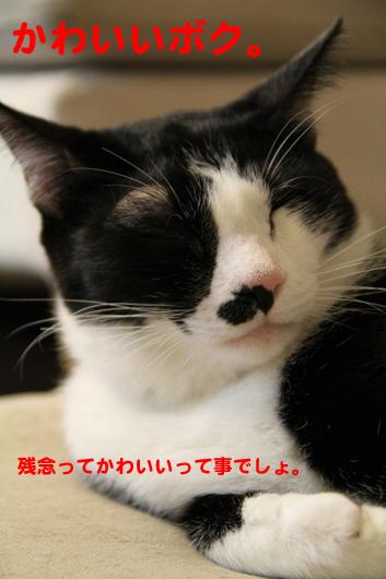 IMG_0017_Rかわいいボク