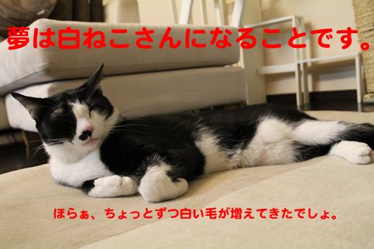 IMG_0018_R夢は白ねこさん